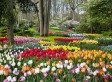 Maniaques de la tulipe !